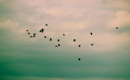 cropped-birds2.jpg